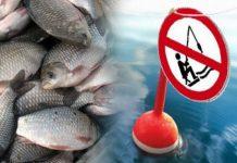 нерест, рыба, запрет