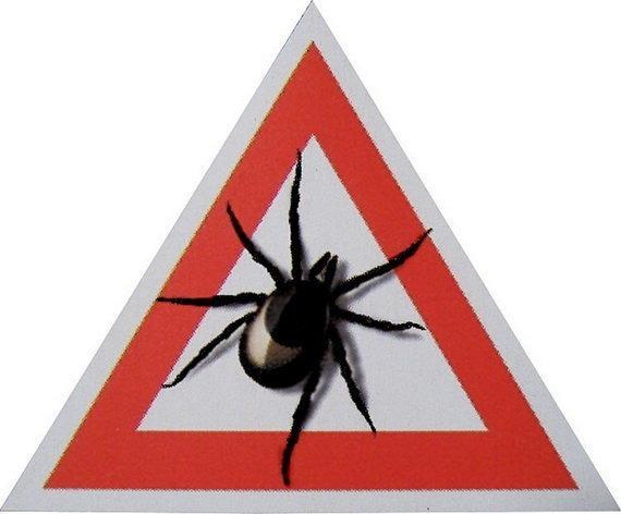 Насколько  опасны клещи
