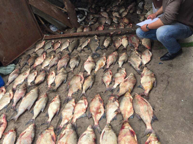 Куда уплывает рыба