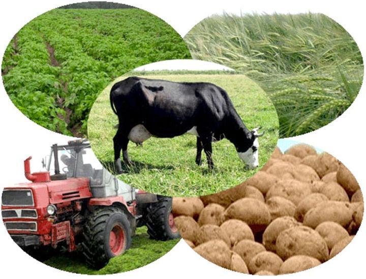 Начинающие фермеры из Ивановской области получили гранты на развитие хозяйства